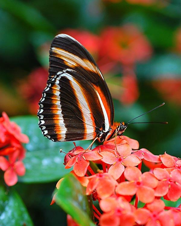 029butterfly