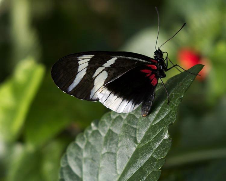 030butterfly