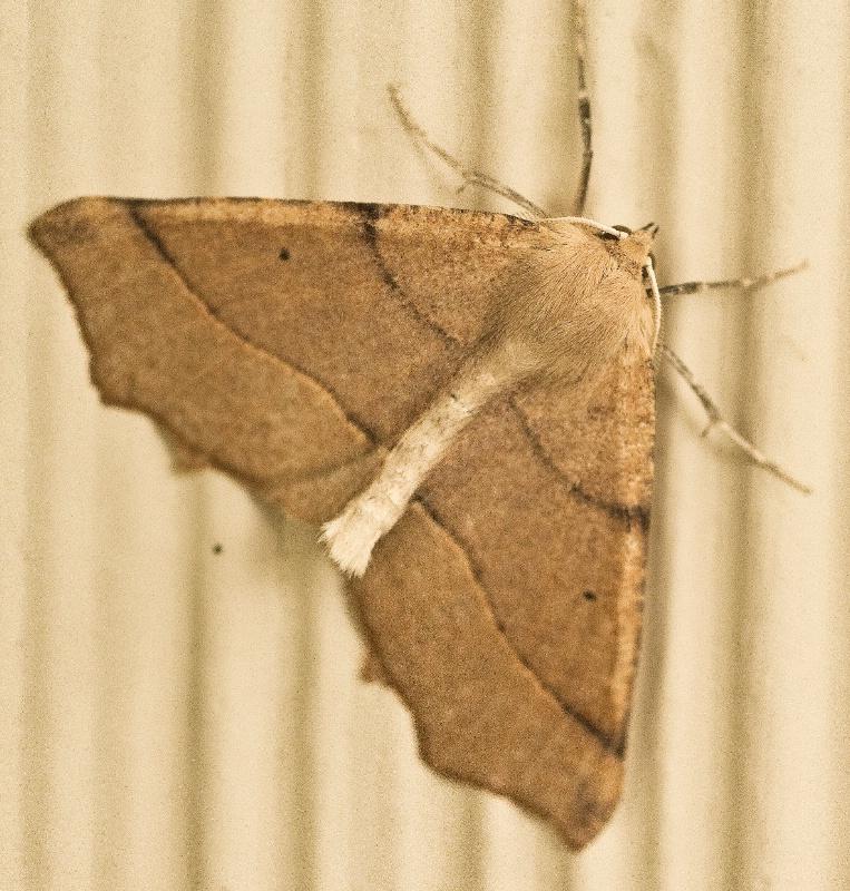 Mr. Moth