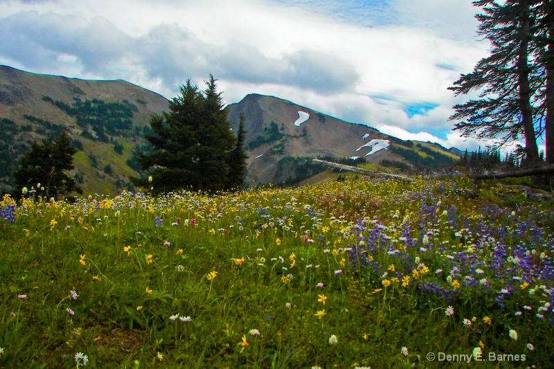Obstruction Point in Bloom, WA
