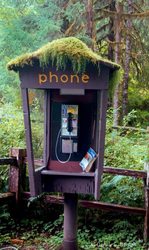 Hello, Mossy Speaking, Hoh Rain Forest, WA