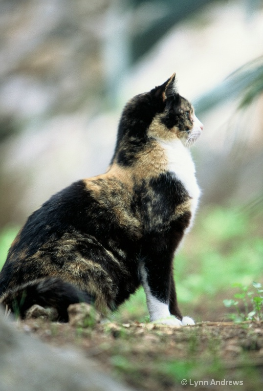 The Cat from Capri