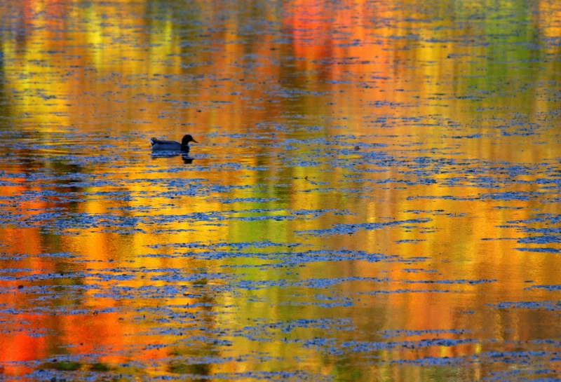 MT10-08 Autumn Duckedelic