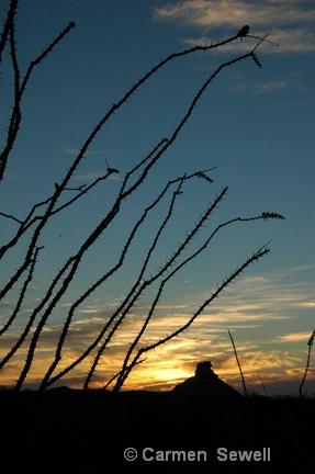 Sunset Big Bend NP