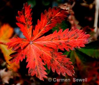 Read Leaf 2
