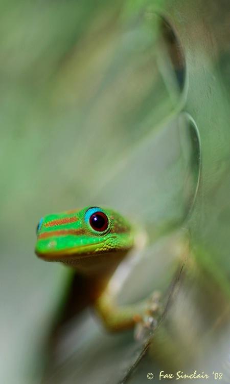 Gecko Rescue 4
