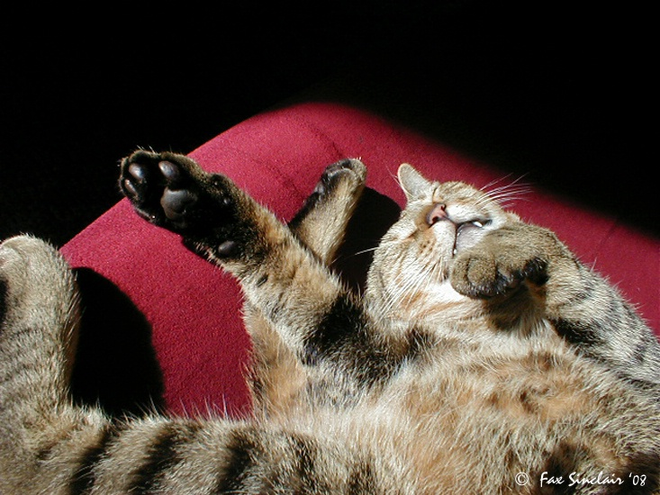 Cat Akimbo