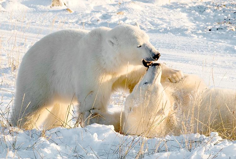 Polar Intimacy