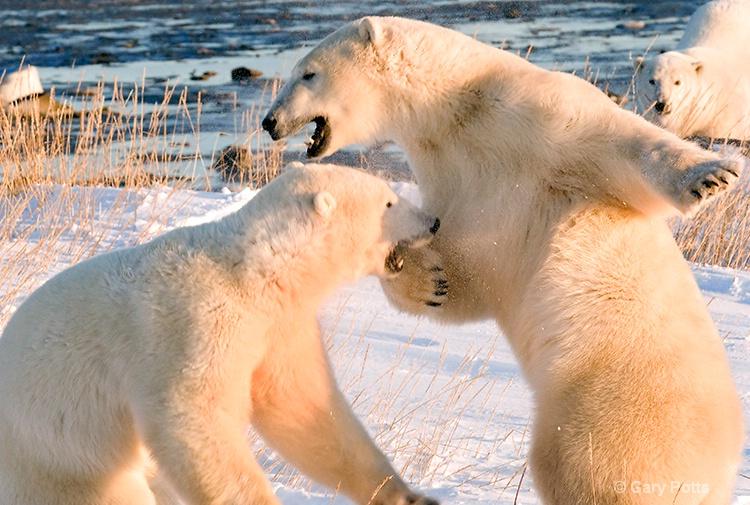 Polar Play