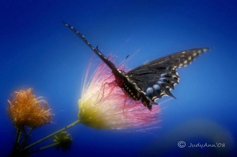 The Flutter of Spring