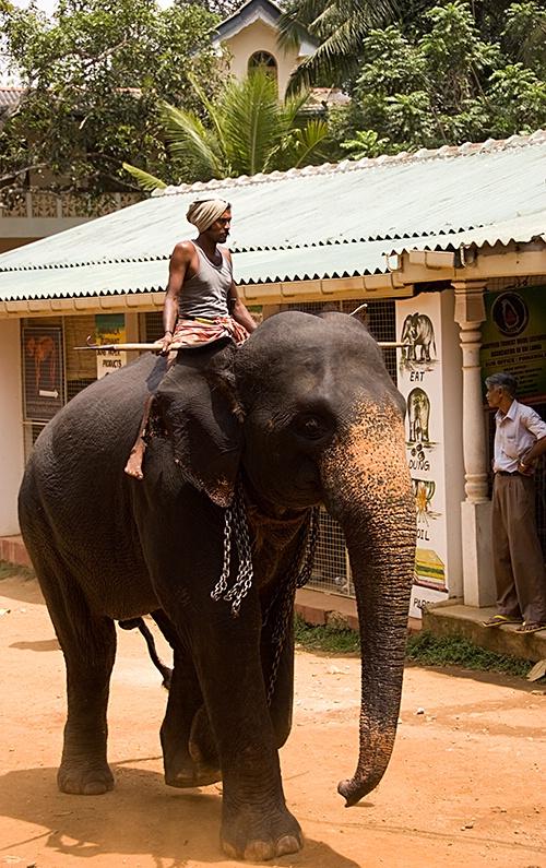 Carer, Kandy