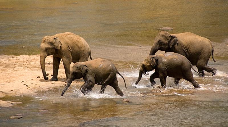 Splashing, Kandy