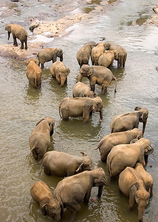 Elephant Orphanage, Kandy