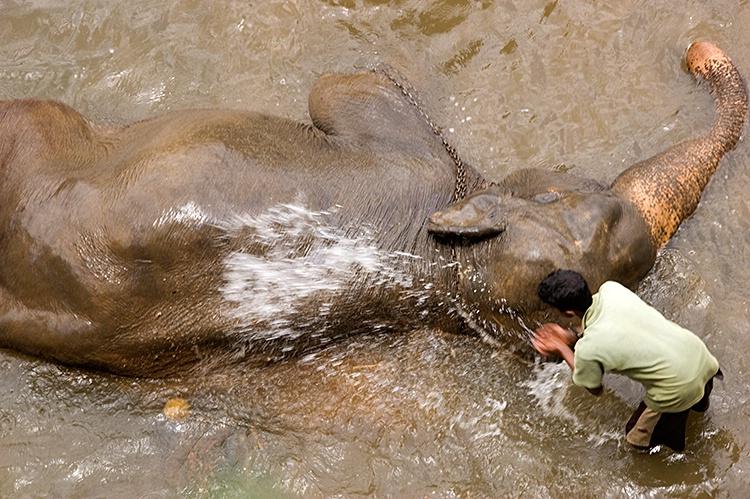Elephant Wash, Kandy