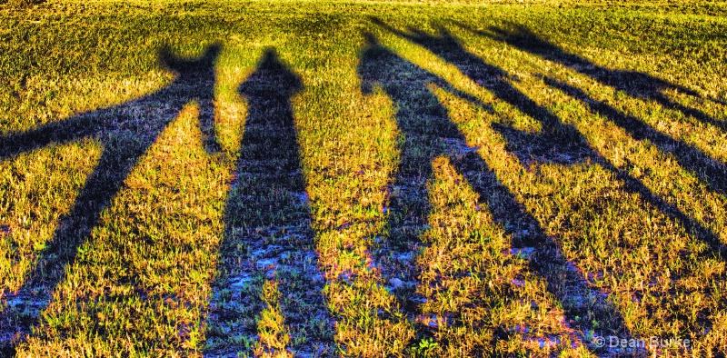 Frozen Tundra Shadows