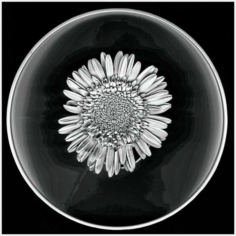 099mixedflowers