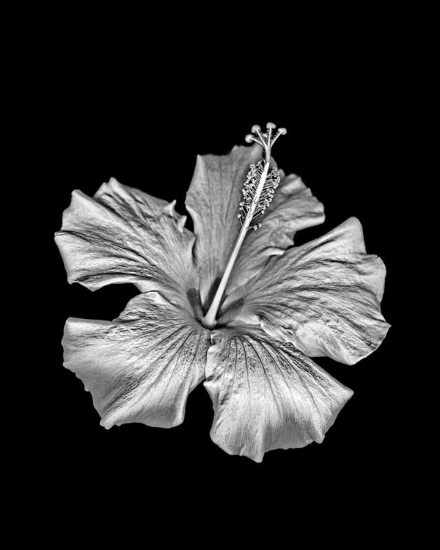100mixedflowers