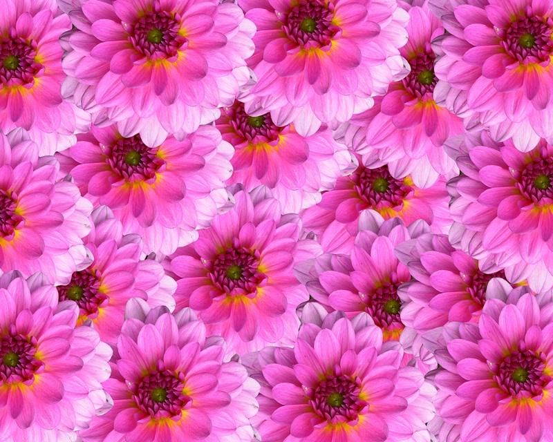 101mixedflowers