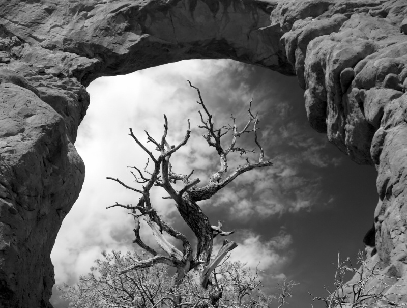 """MT """"A"""" 12/08  Arches Framed Tree"""