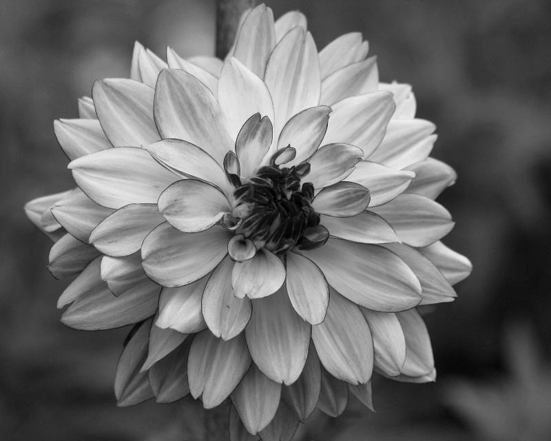 Floral Memoir