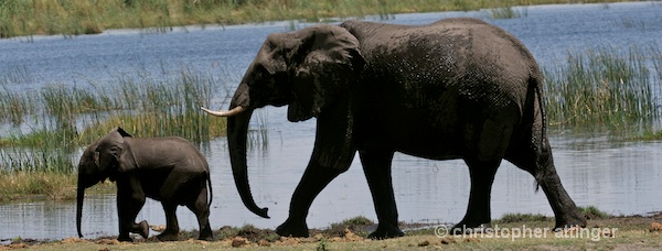 BOB_0236 - Elephant mother and calf
