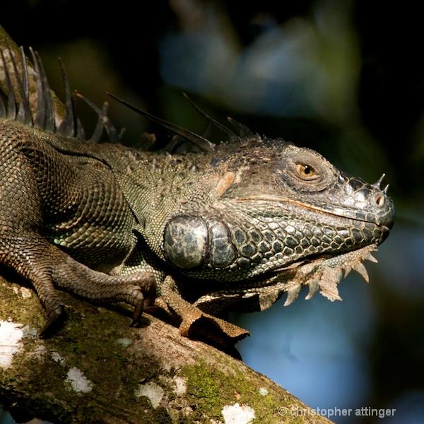DSC_2023 lizard