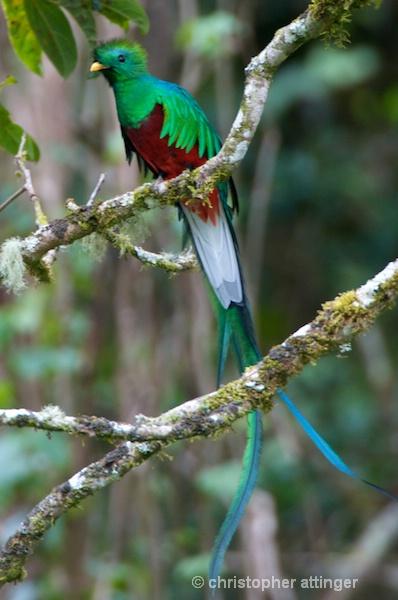 DSC_0687 Quetzal