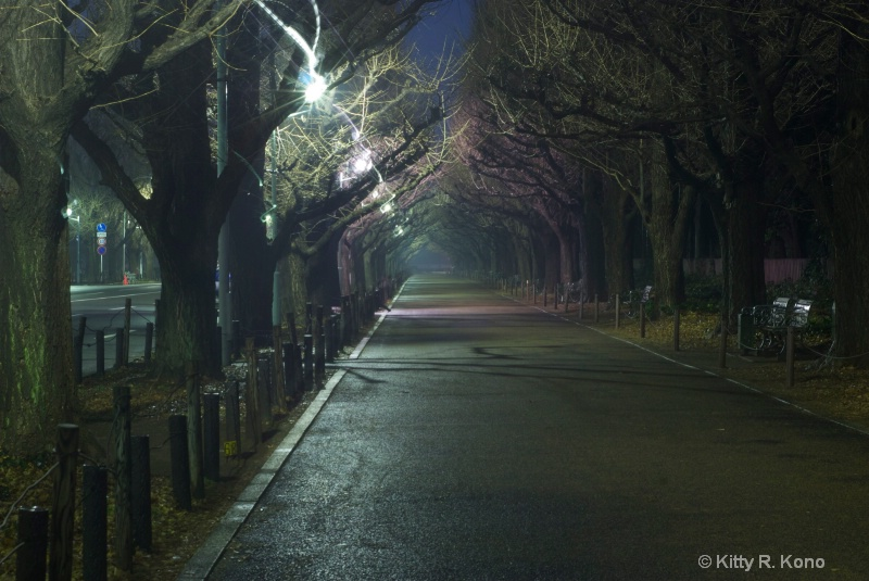 Gaien Dori (Ginko Tree Lane) in Winter
