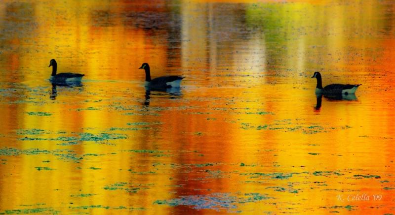 Goosedelic Autumn Reflection 2