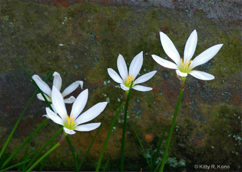 Little White Flowers in Aoyama Cemetery