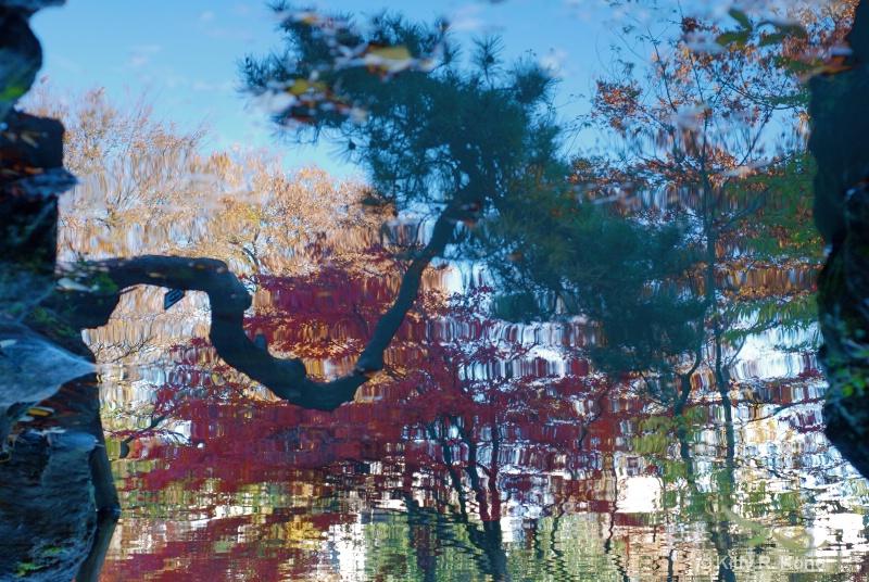 Reflection at Arisugawa