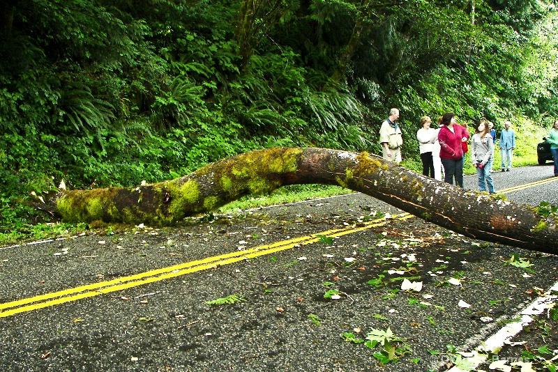 Low Bridge, Road to Hoh Rain-forest-WA