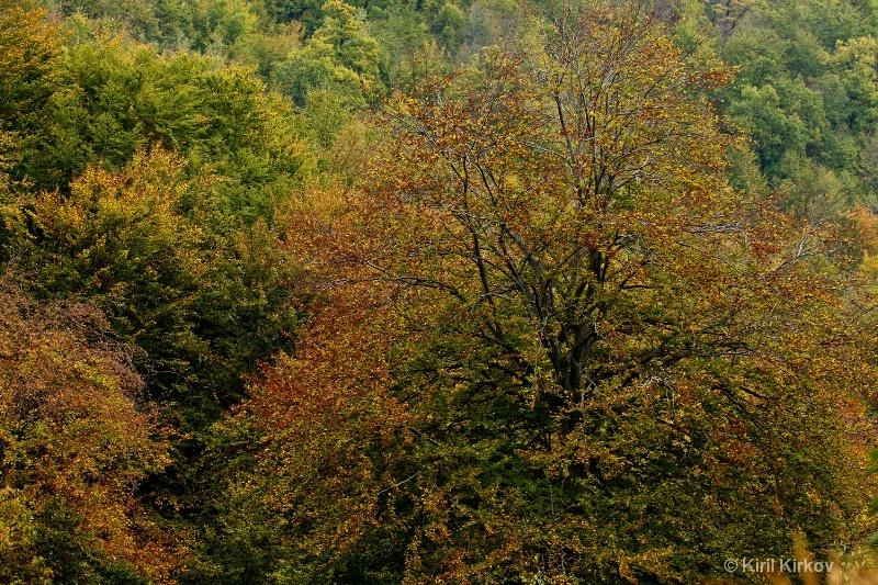 autumn-trees1