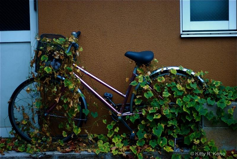 Ivy Bike - On the Way to Nishimachi