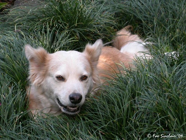 Pookie in the Grass
