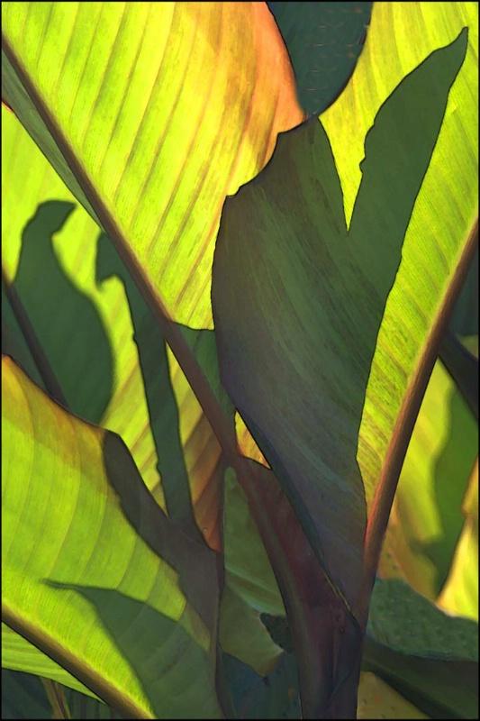 Plant Shadows 2 card
