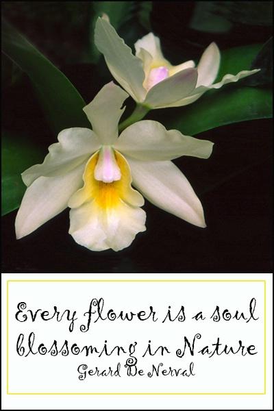 Flower is a Soul card