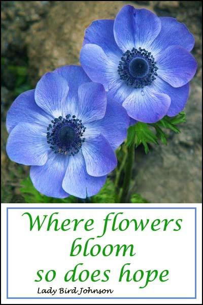 Flowers Bloom card