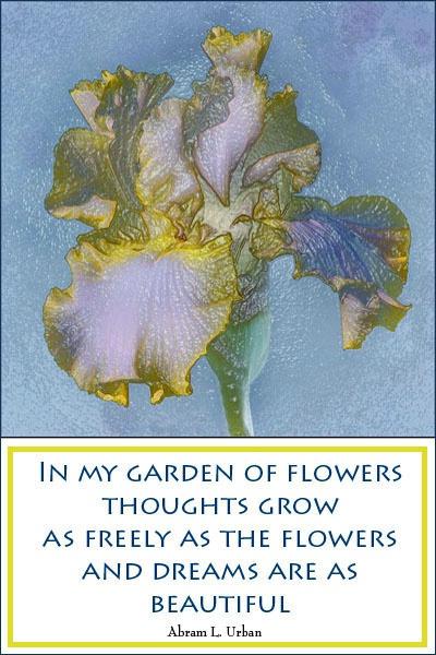 Garden of Flowers card