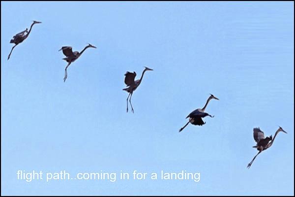 Heron Flight Path card