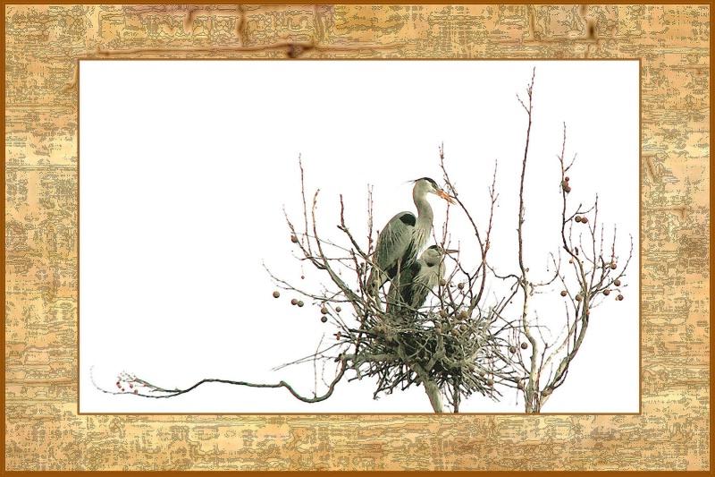 Herons in Oriental Frame card