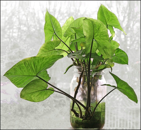 green plant in the window