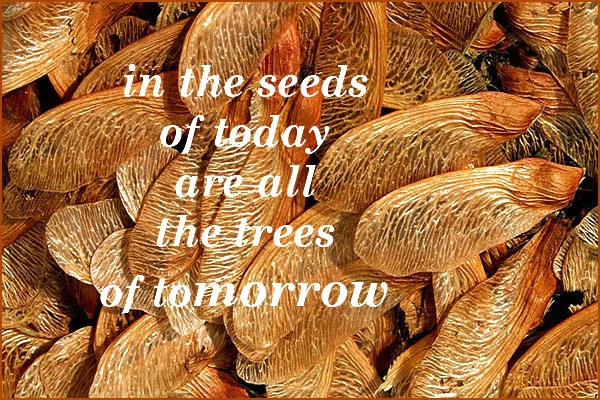 Seeds Of Today card