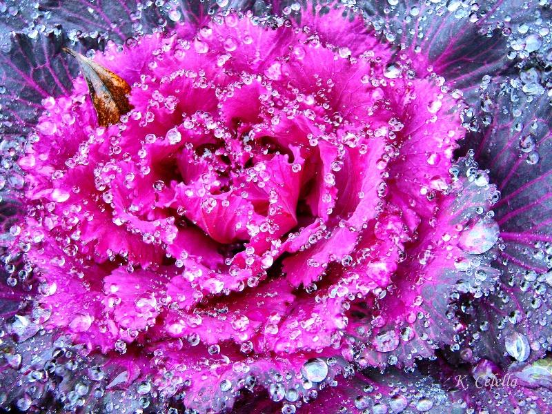 Natures Jewels 2