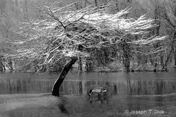 Lonely  Winter Feeder bw