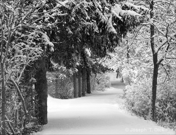 Snowy Park Path 2