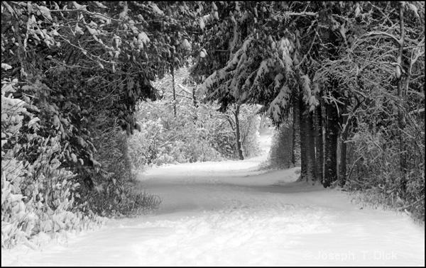 Snowy Park Path 3 bw