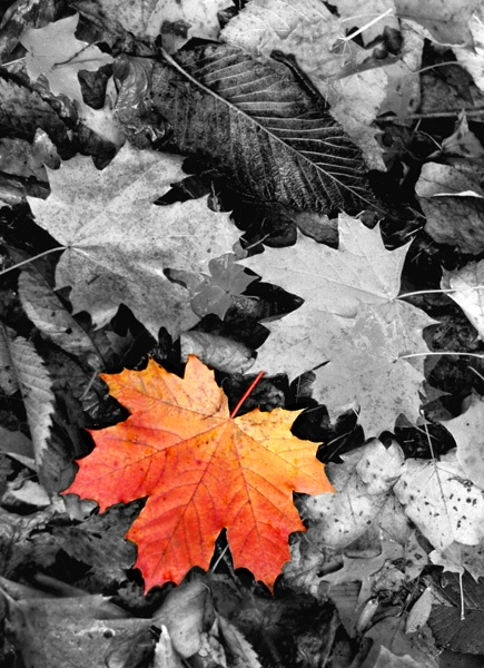 outstanding leaf