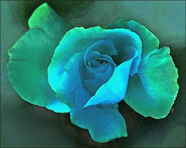 Aqua Rose Wtr Color