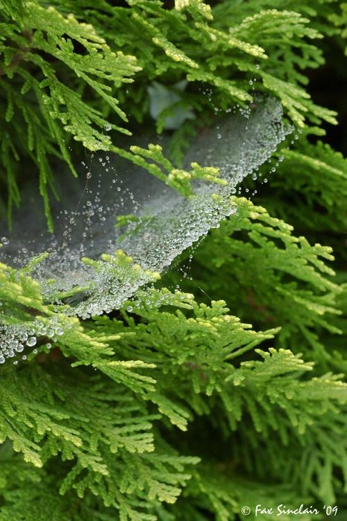 Cobweb Angle